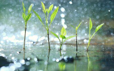 dividend rain