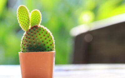 cactus_pot